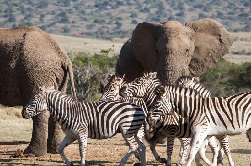 Südafrika Reisen mit David Kingwill